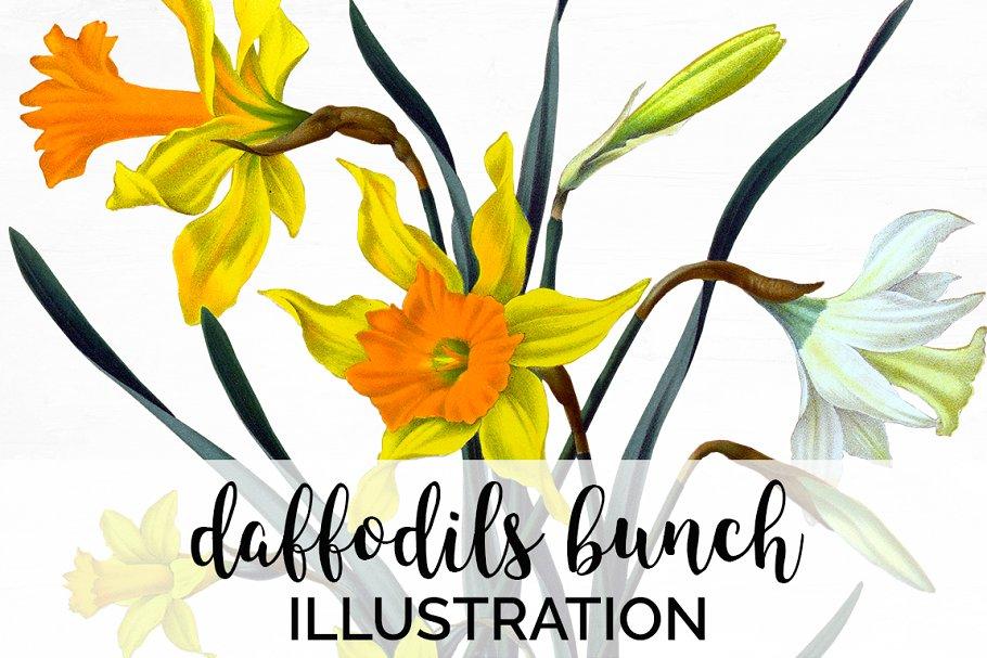 Daffodils Yellow Daffodil