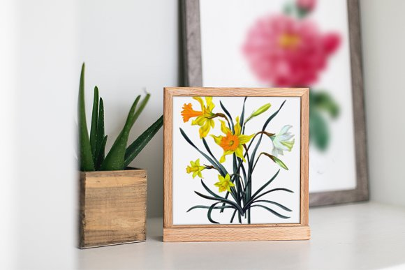 Daffodils Yellow Daffodil in Illustrations - product preview 3