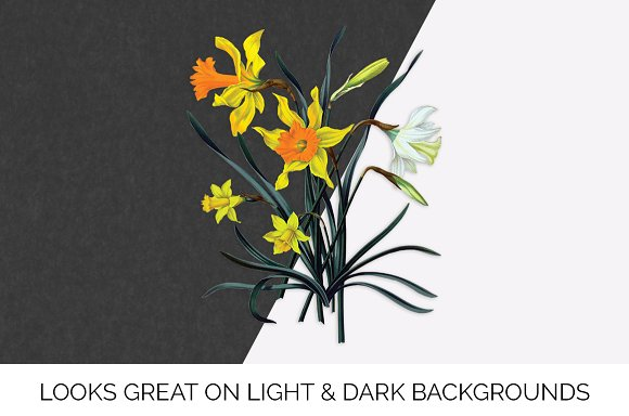 Daffodils Yellow Daffodil in Illustrations - product preview 5