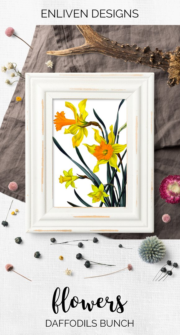 Daffodils Yellow Daffodil in Illustrations - product preview 7
