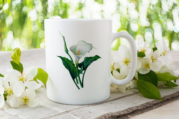 Lily White Flowers Lilies in Illustrations - product preview 5
