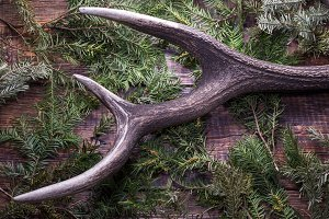Natural antler. Huntsman composition