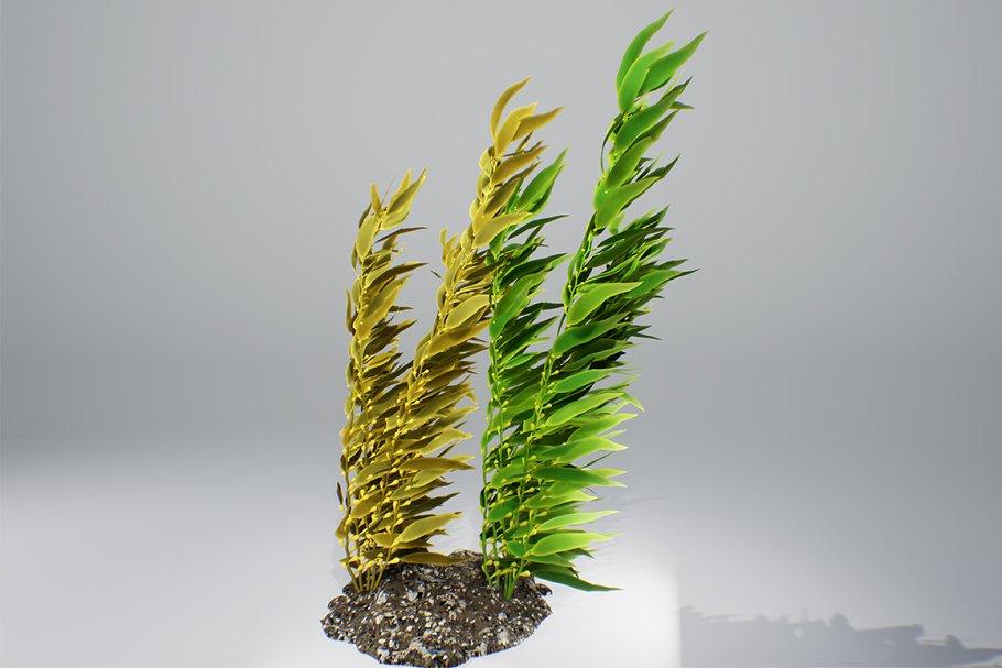 Kelp bush