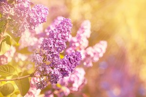 Bright spring natural lilac backgrou