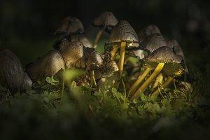 Mushrooms close-up