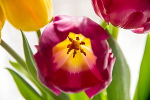 A bouquet of yellow and pink tulips
