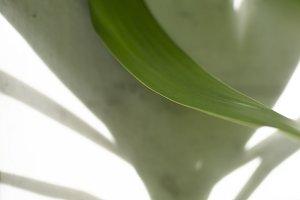 Tropical leaves palm tree