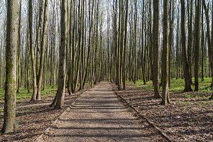 Path in the spring forest park.