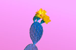 Blue Cactus with flower. Minimal Fas