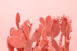 Living Coral Cactus pastel color. Cr