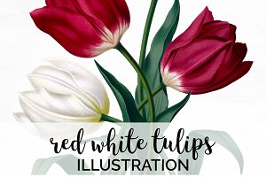 red white tulips Vintage Flowers