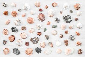 Lots of seashells on white wooden ba