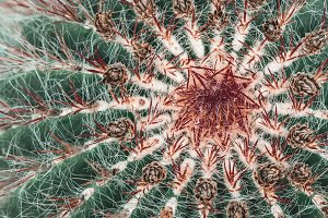 Green cactus with dark red spines
