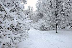 Trees covered with snow and a path