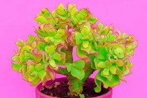 Minimal cactus design. Cactus lover