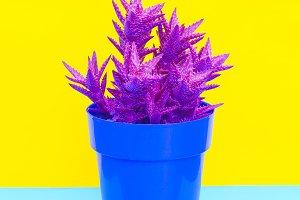 Colorful cactus design  Minimal cact