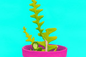 Colorful cactus design art. Minimal