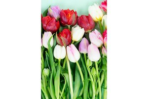 Fresh tulips flowers with heart