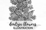 deutzia flowers Vintage Flowers