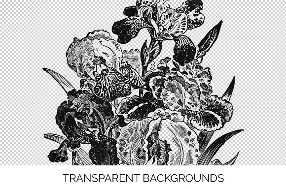 Iris Clipart Black and White Flowers in Illustrations - product preview 2