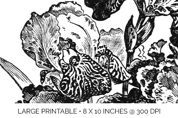 Iris Clipart Black and White Flowers in Illustrations - product preview 4