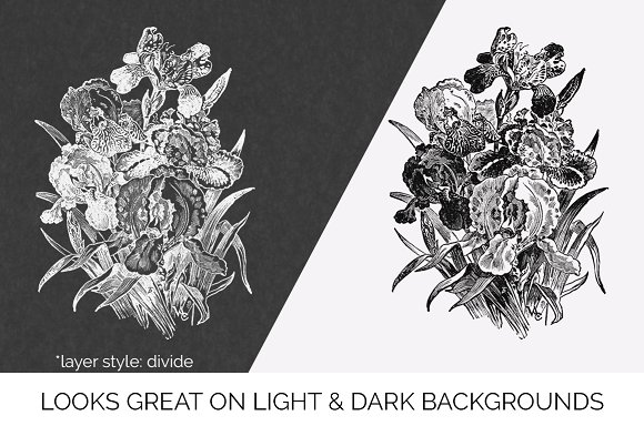Iris Clipart Black and White Flowers in Illustrations - product preview 6