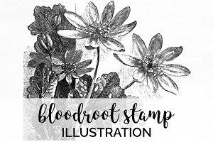 bloodroot stamp Vintage Flowers