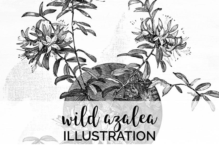 wild azalea Vintage Flowers