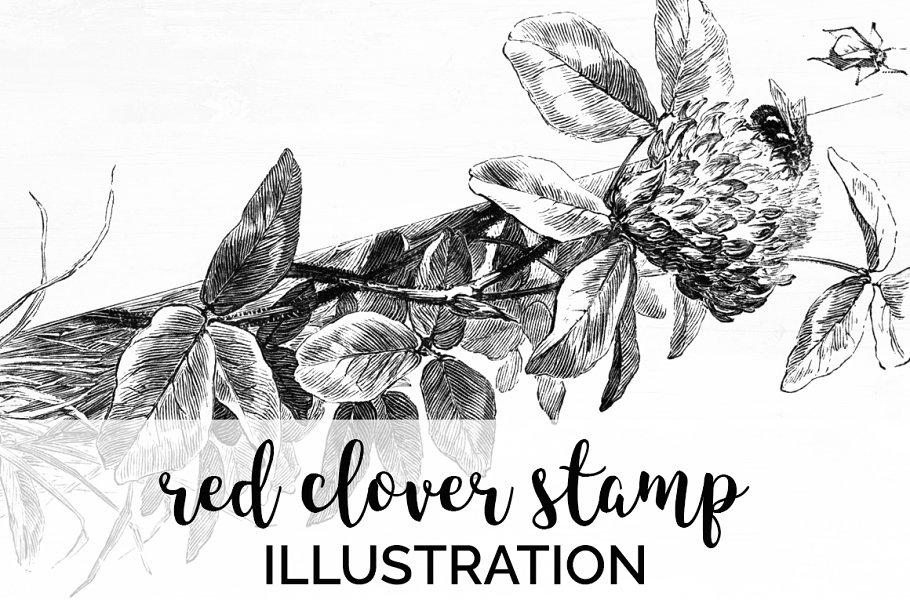 red clover stamp Vintage Flowers