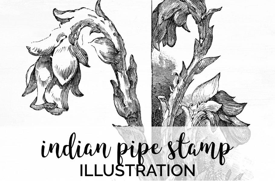 indian pipe stamp Vintage Flowers