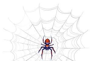 Exotic danger spider on web