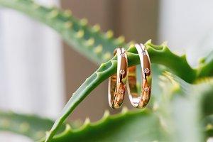 Golden wedding rings, aloe vera