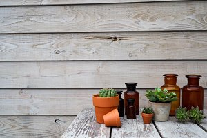 Succulent plants and wood background