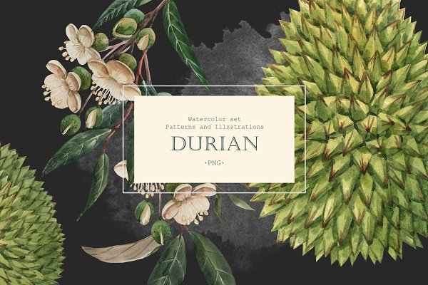 Illustrations: Lembrik's Artworks - Watercolor Durian Set (PNG)