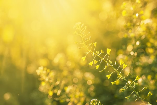 Stock Photos: 5PH - Defocused spring natural green backg