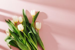 White tulips on pale pink background