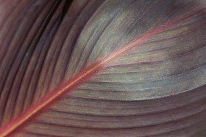 Close up of exotic dark leaf texture