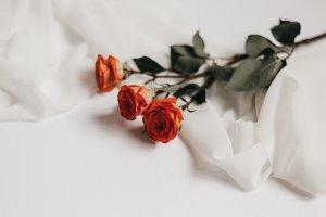 Tangerine Rose Styled Stock 050
