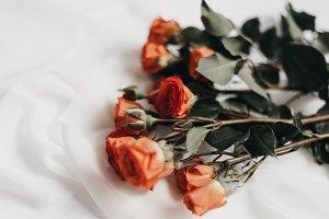 Tangerine Rose Styled Stock 060