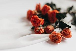 Tangerine Rose Styled Stock 071