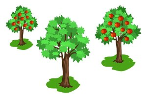 Apple Tree with Green Leaves and Red