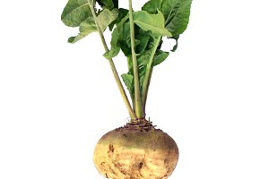 Isolated full turnip