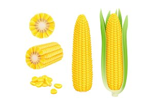 Corn cob realistic. Yellow canned