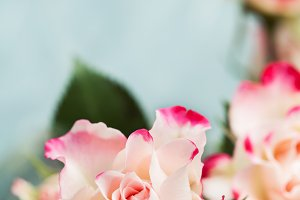 Bouquet of beautiful white pink rose