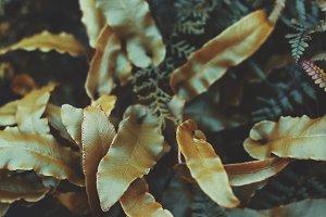 Golden Leaves Closeup