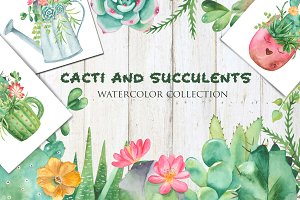 Succulents and cacti. Watercolor.