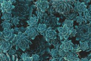 Succulents in Blue