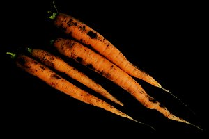 Four carrots on dark background