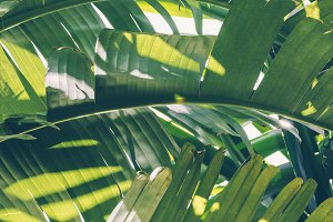 Tropical Leaves exotic background