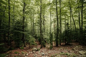 Lost forest in the north of spain a